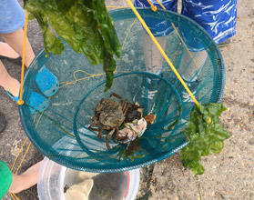 Crabbing, a huge hit with the kids.